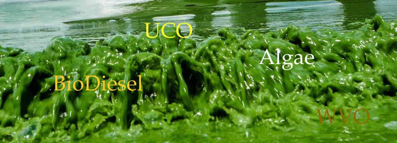 Algae BioDiesel Backdrop
